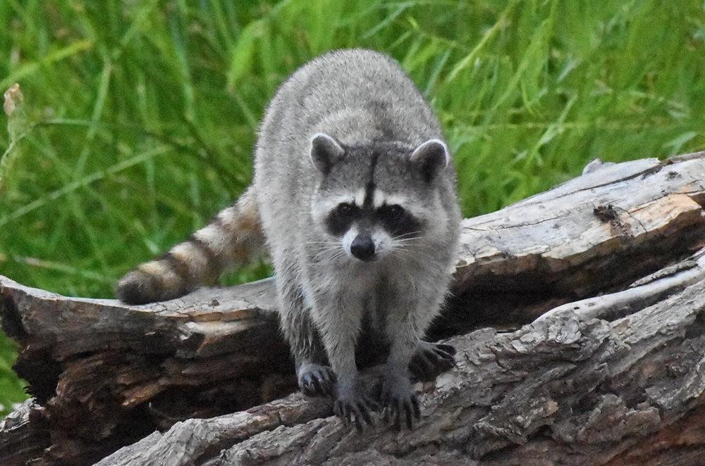 卡诺阿牧场野生动物保护区巡游---2_图1-15