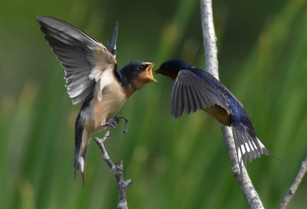 卡诺阿牧场野生动物保护区巡游---2_图1-17