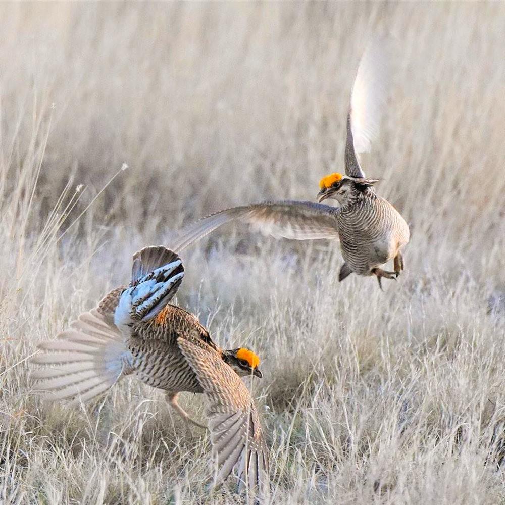 卡诺阿牧场野生动物保护区巡游---2_图1-23