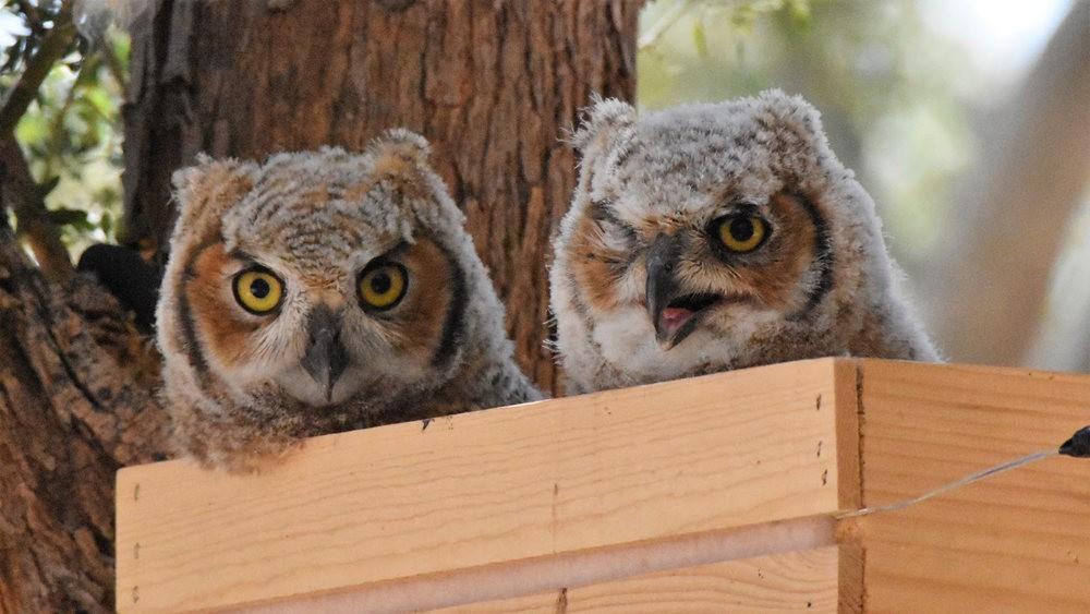 卡诺阿牧场野生动物保护区巡游---2_图1-29