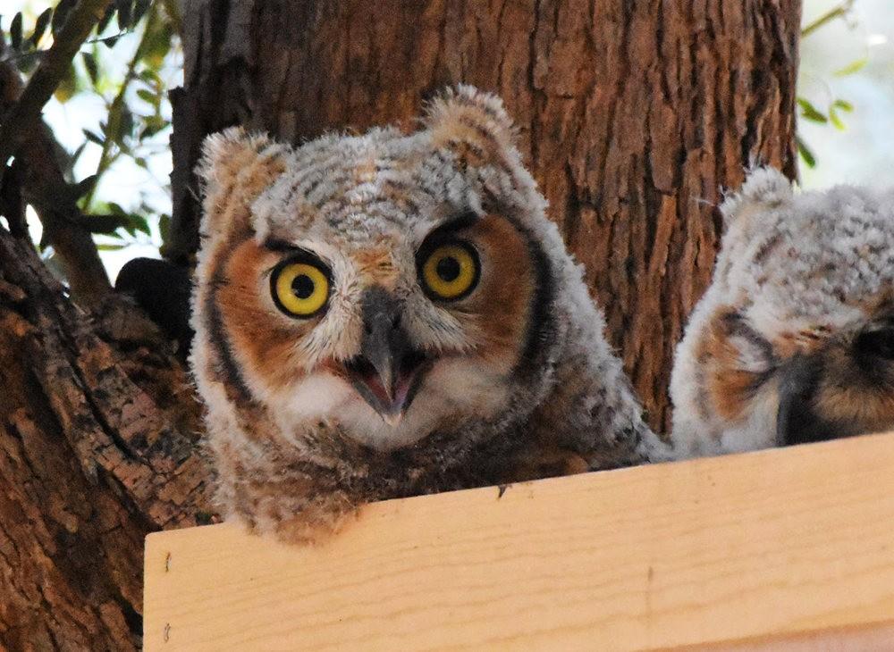 卡诺阿牧场野生动物保护区巡游---2_图1-30