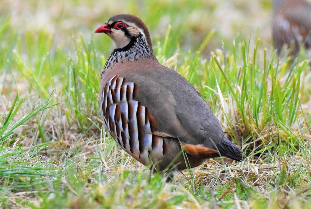 卡诺阿牧场野生动物保护区巡游---2_图1-31