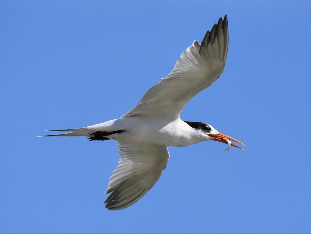 马柴厄斯封印岛看鸟_图1-22