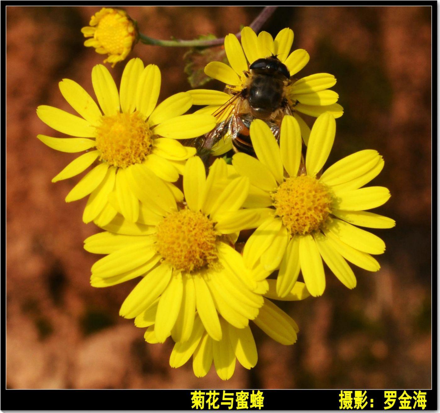 立冬日(七律)_图1-1
