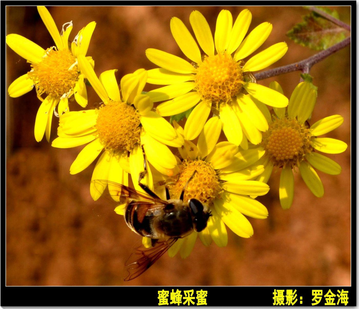 立冬日(七律)_图1-2