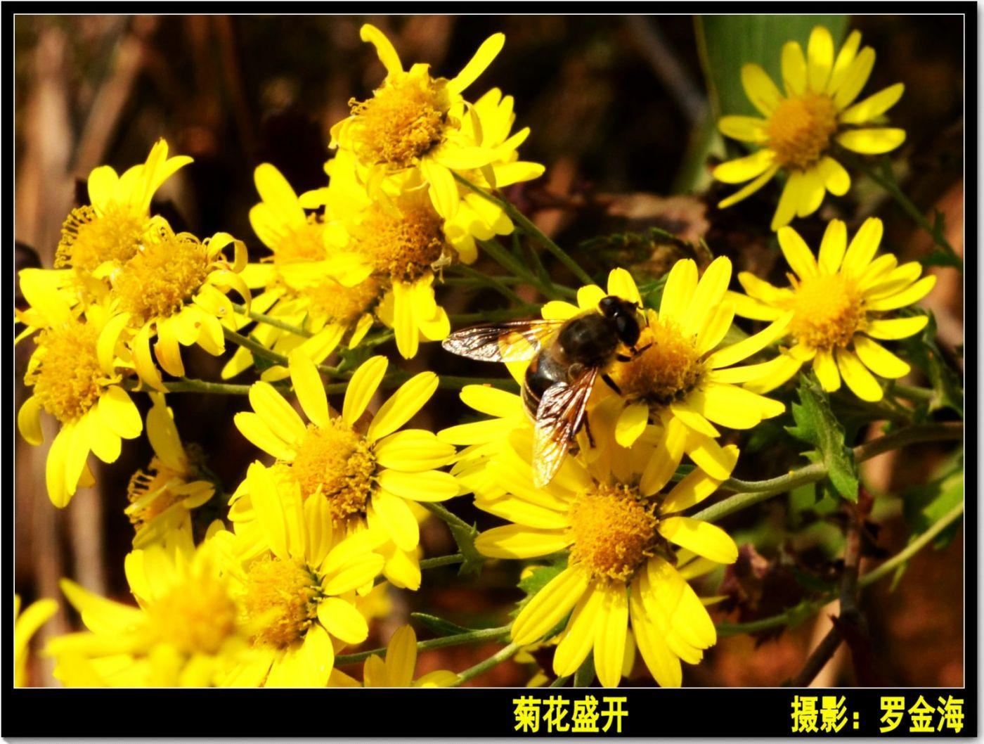 立冬日(七律)_图1-3
