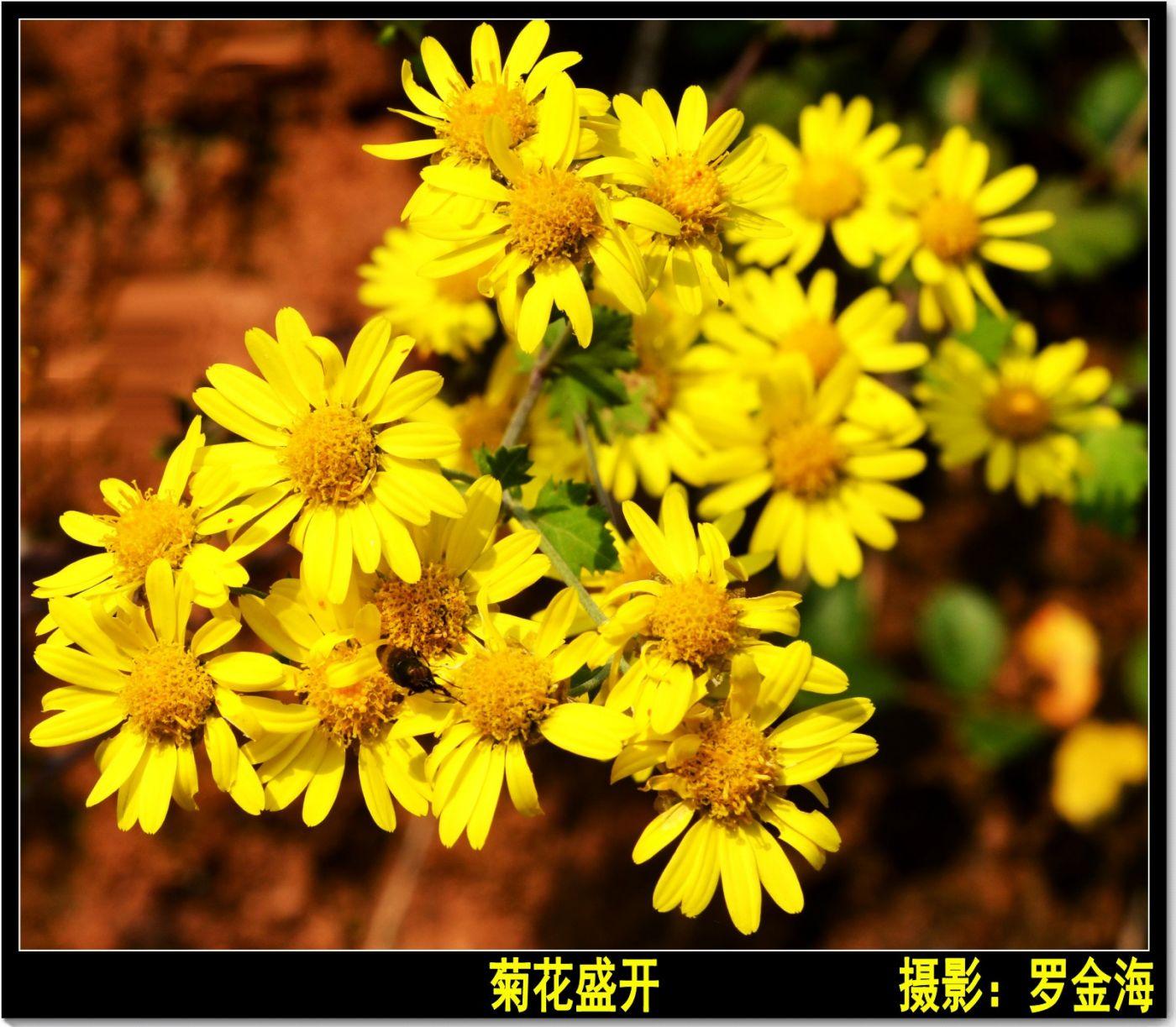 立冬日(七律)_图1-4