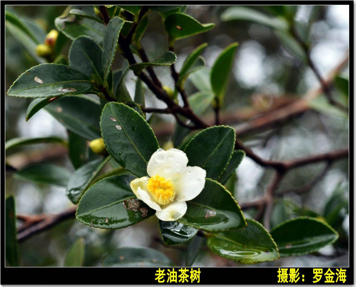 立冬日(七律)_图1-5