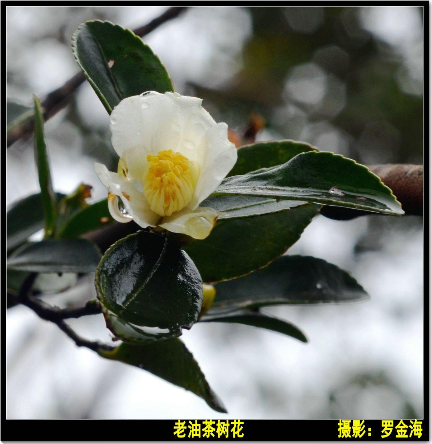 立冬日(七律)_图1-8