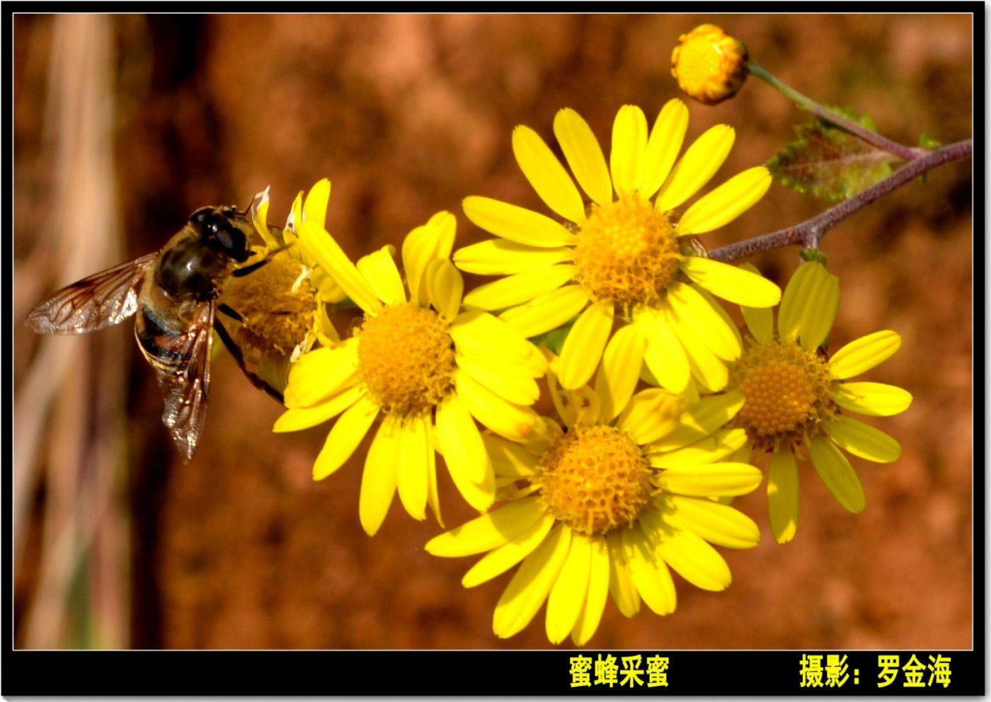 立冬日(七律)_图1-9