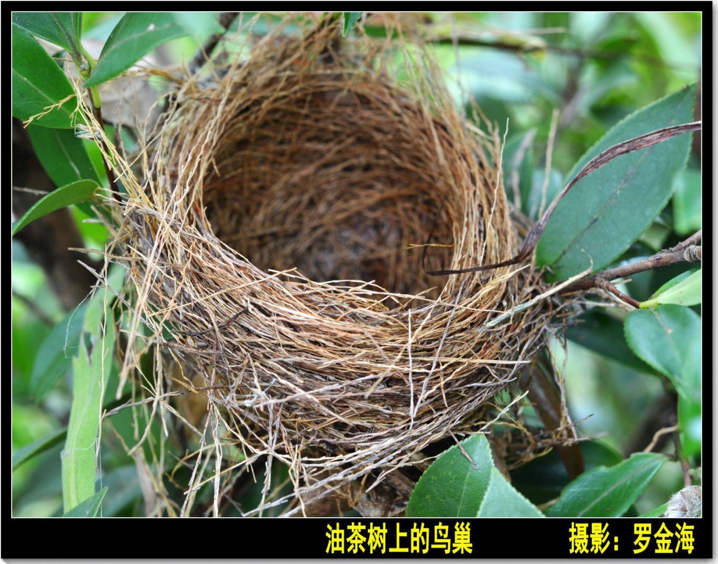 立冬日(七律)_图1-7