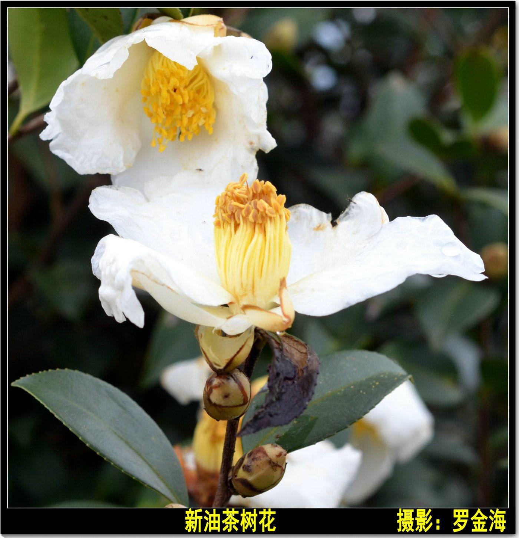 立冬日(七律)_图1-10