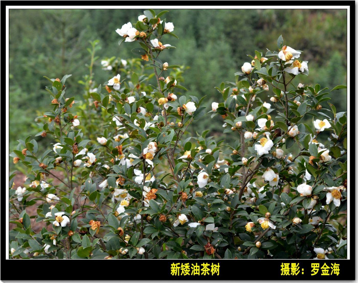 立冬日(七律)_图1-11