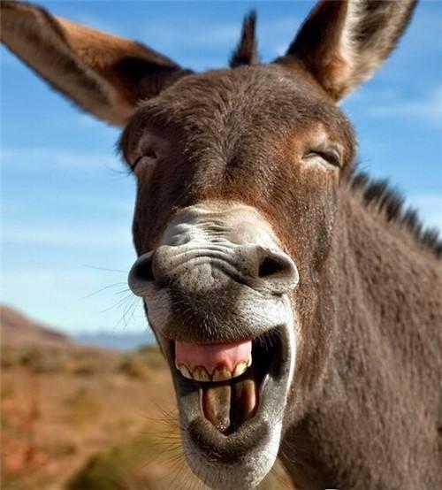 布里丹的驴子……_图1-1