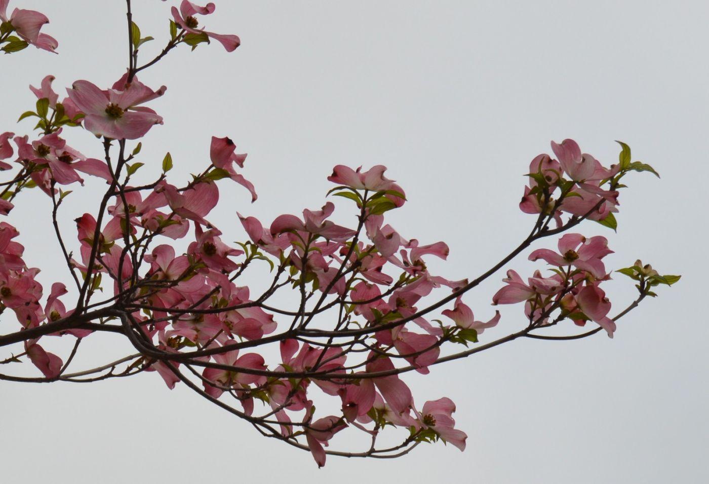 花草图谱 (10)_图1-7