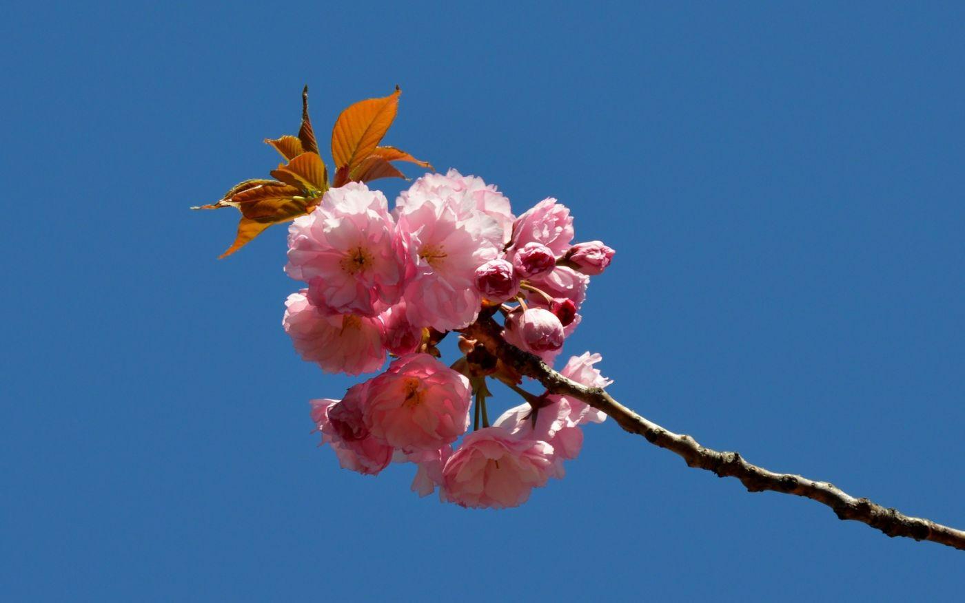 花草图谱 (11)_图1-10