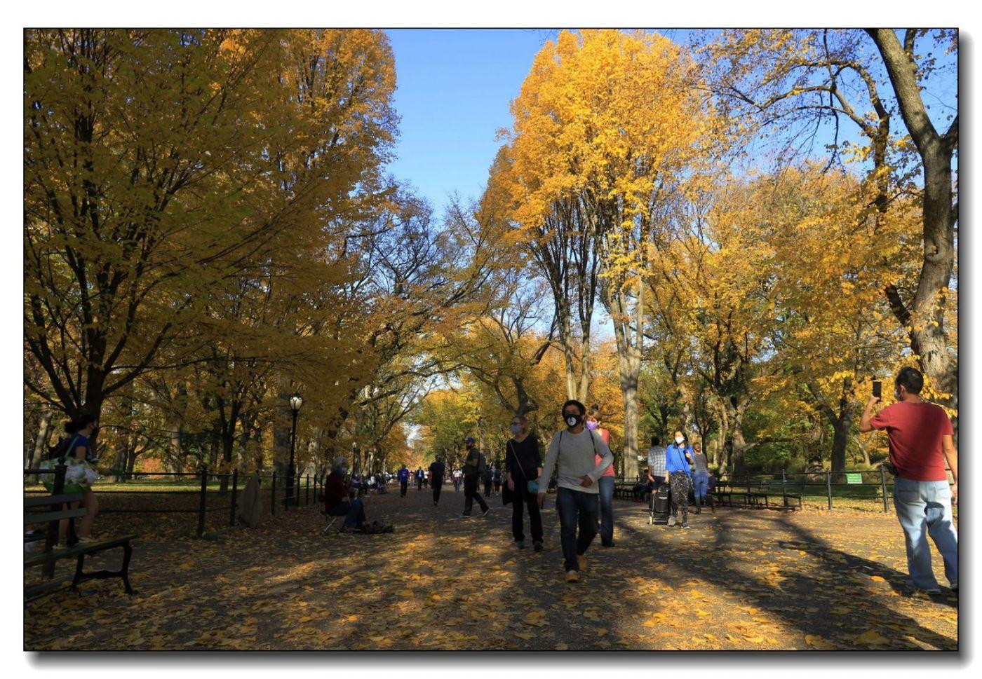 深秋色彩-中央公园1_图1-8