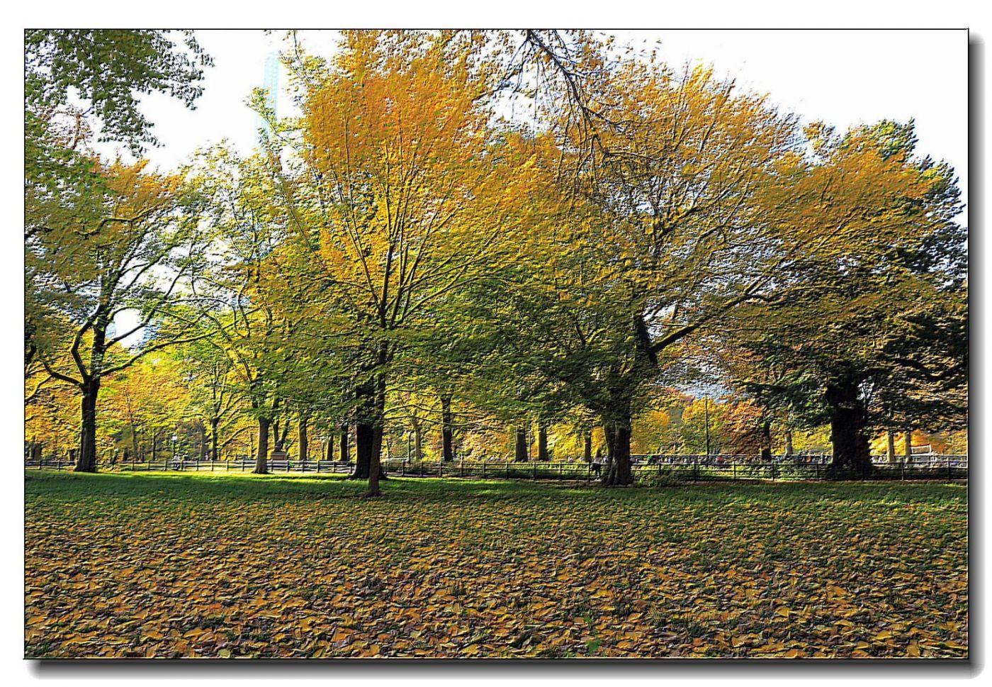 深秋色彩-中央公园1_图1-9