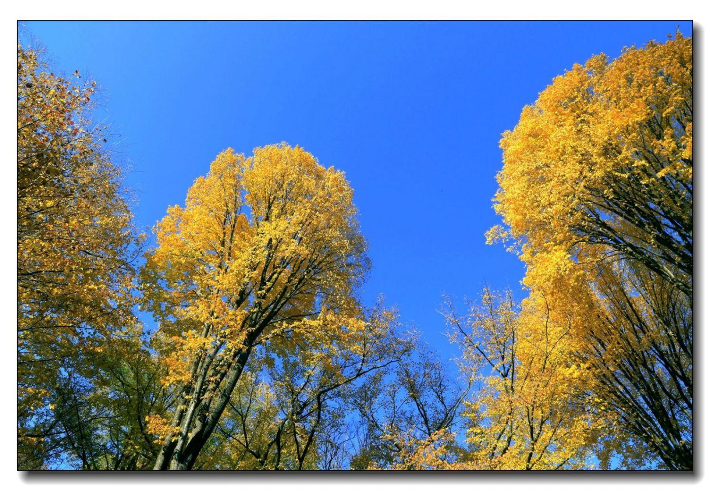 深秋色彩-中央公园1_图1-10