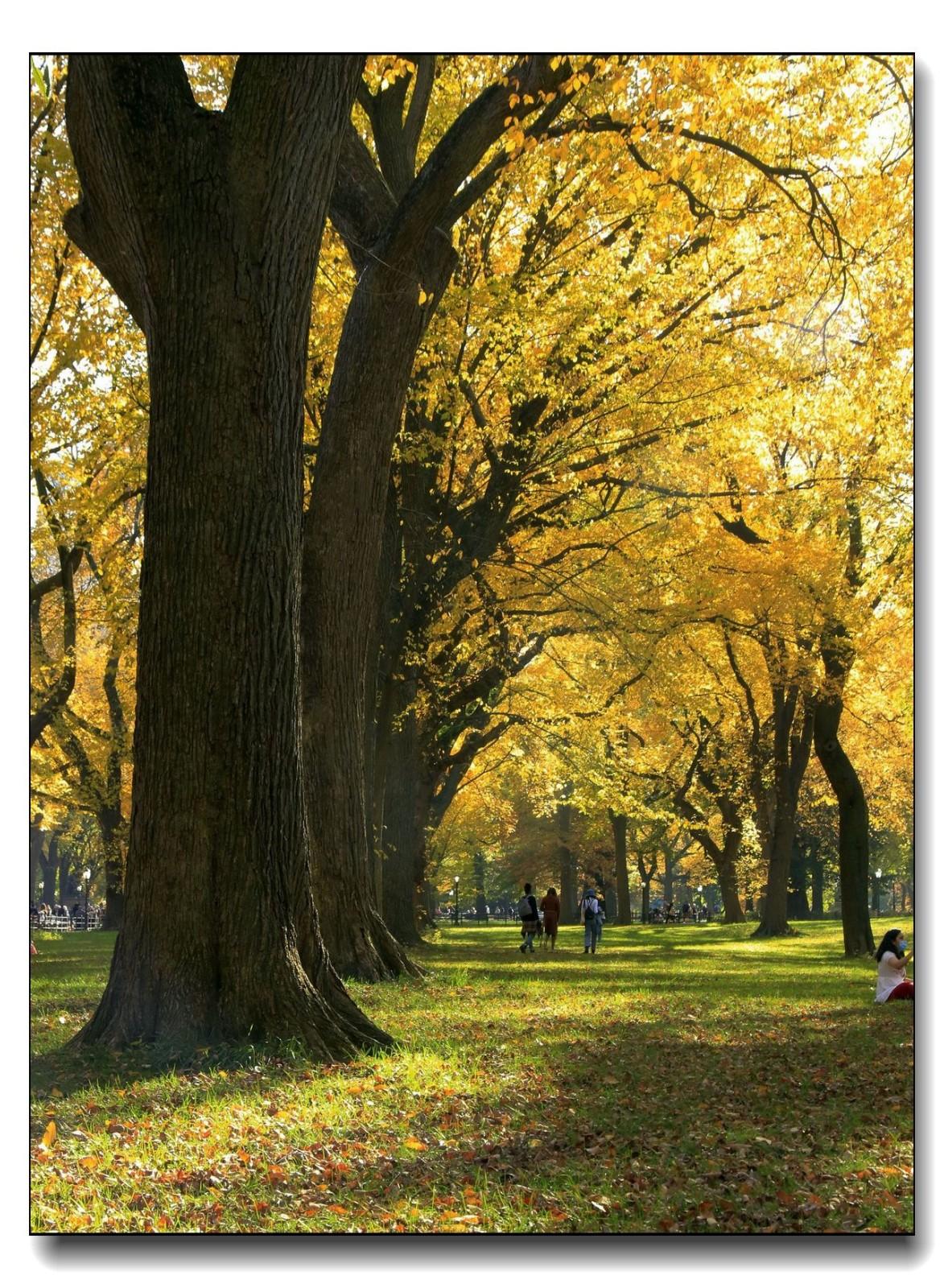 深秋色彩-中央公园1_图1-11