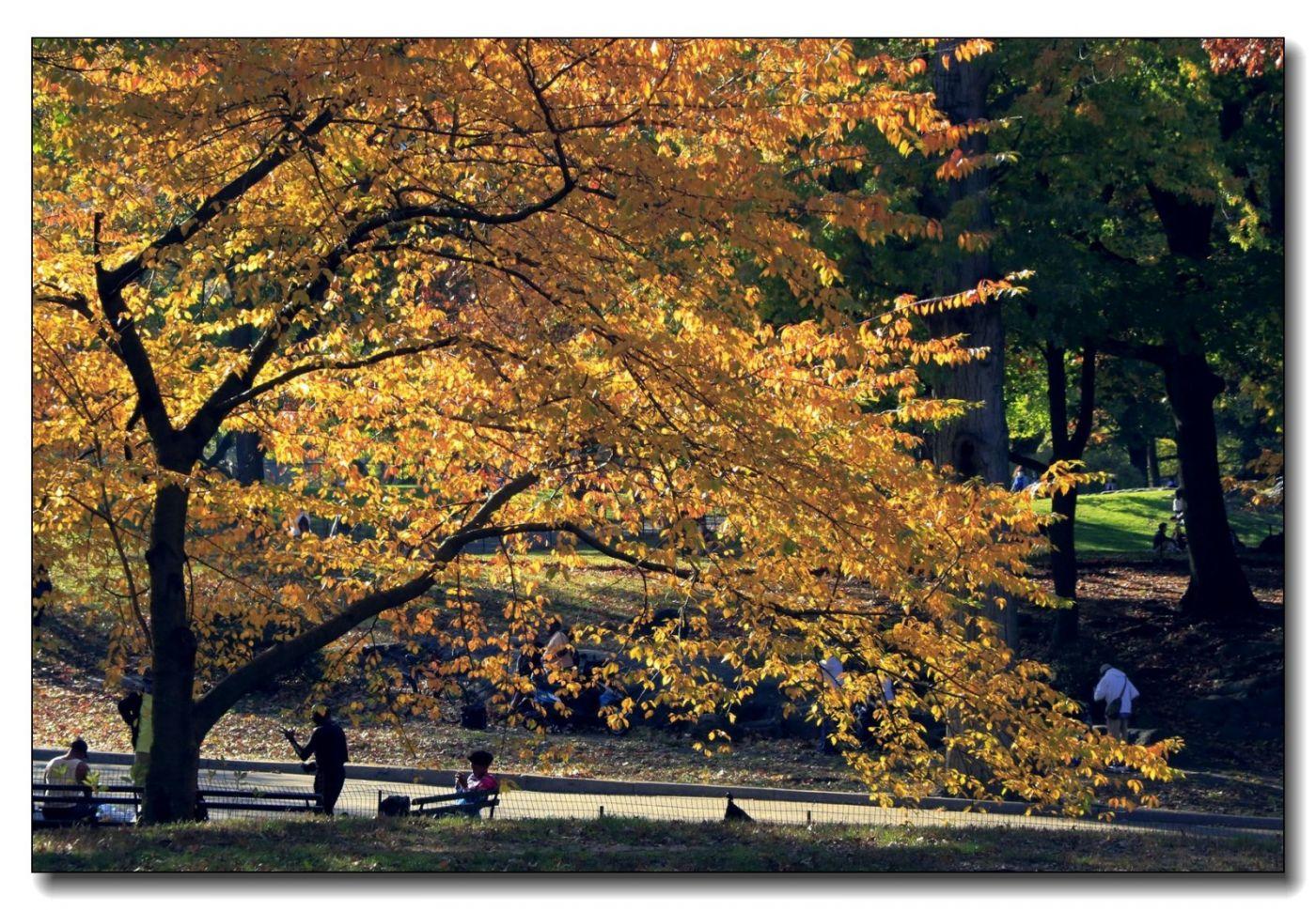 深秋色彩-中央公园1_图1-14