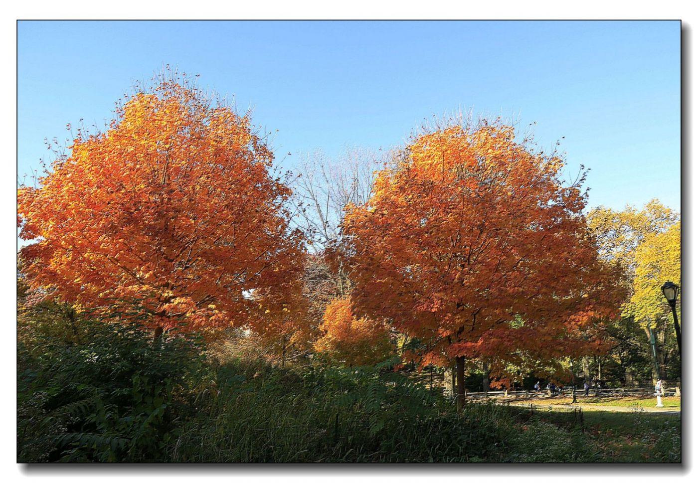 深秋色彩-中央公园1_图1-15