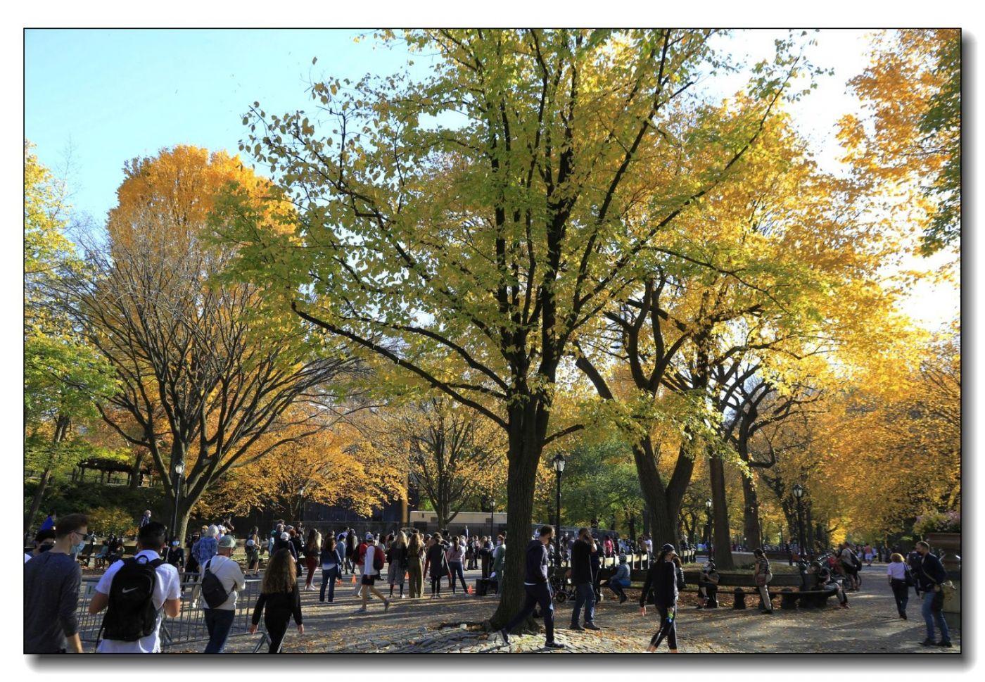 深秋色彩-中央公园1_图1-18