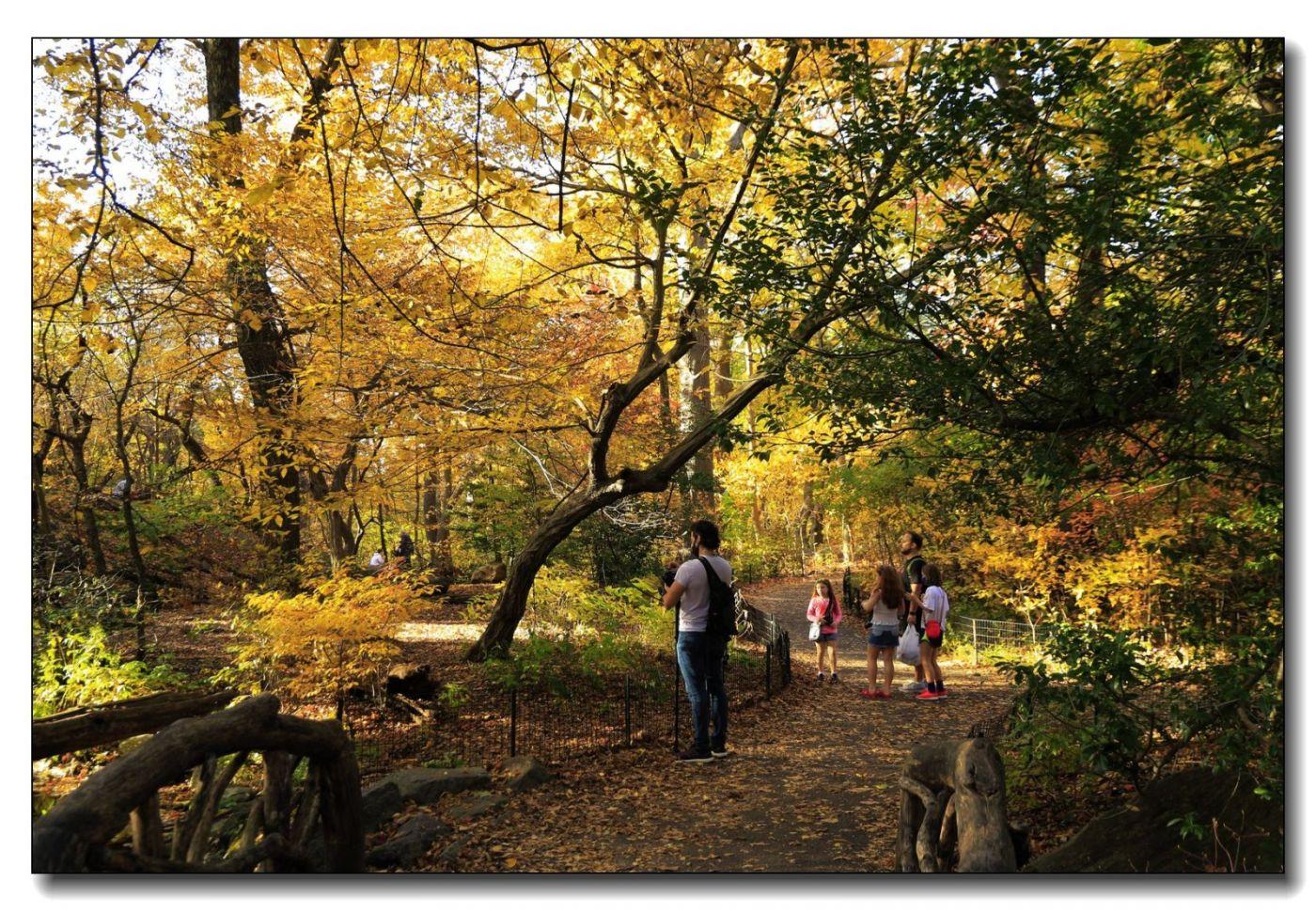 深秋色彩-中央公园2_图1-4