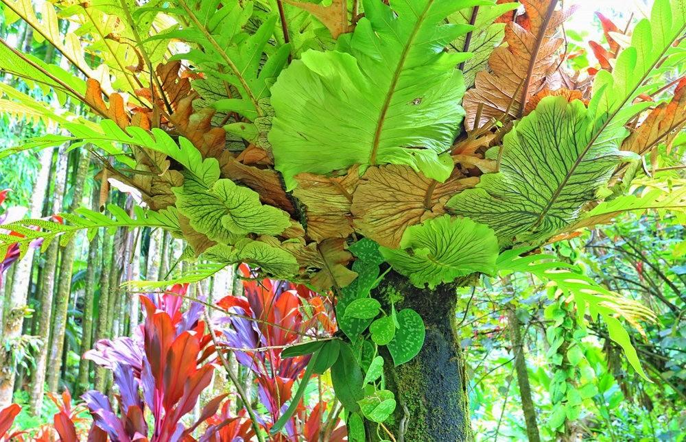 参观夏威夷热带生物保护区花园_图1-1
