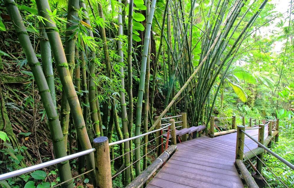 参观夏威夷热带生物保护区花园_图1-4