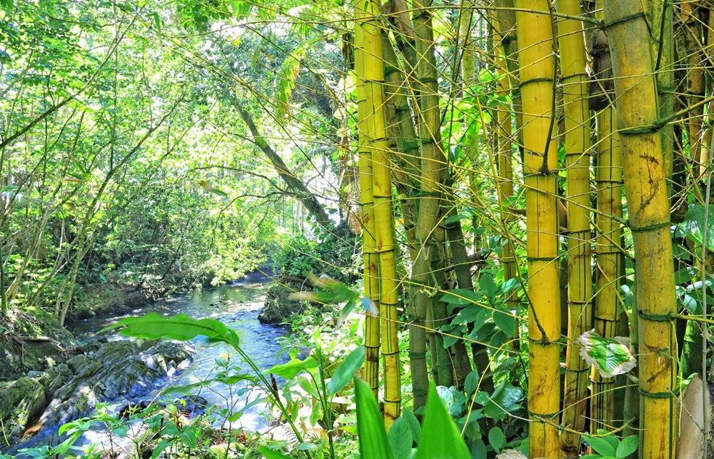参观夏威夷热带生物保护区花园_图1-5