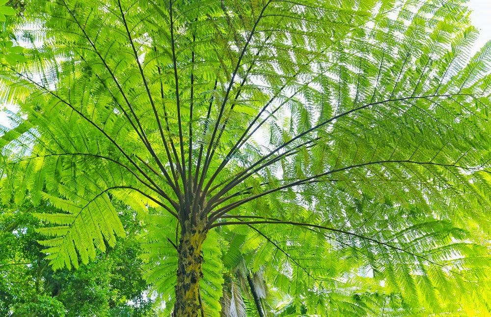 参观夏威夷热带生物保护区花园_图1-6