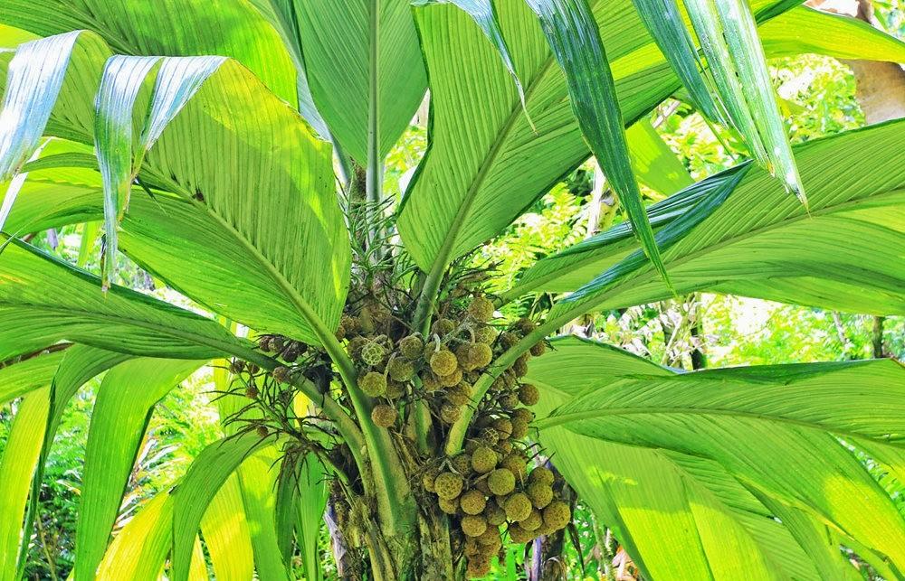 参观夏威夷热带生物保护区花园_图1-7