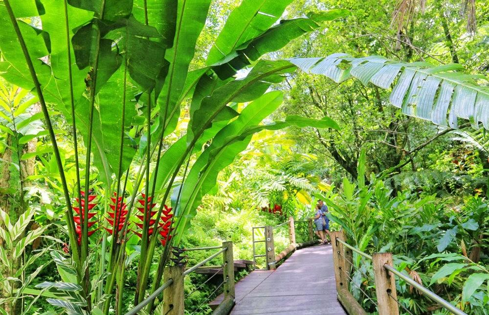 参观夏威夷热带生物保护区花园_图1-8