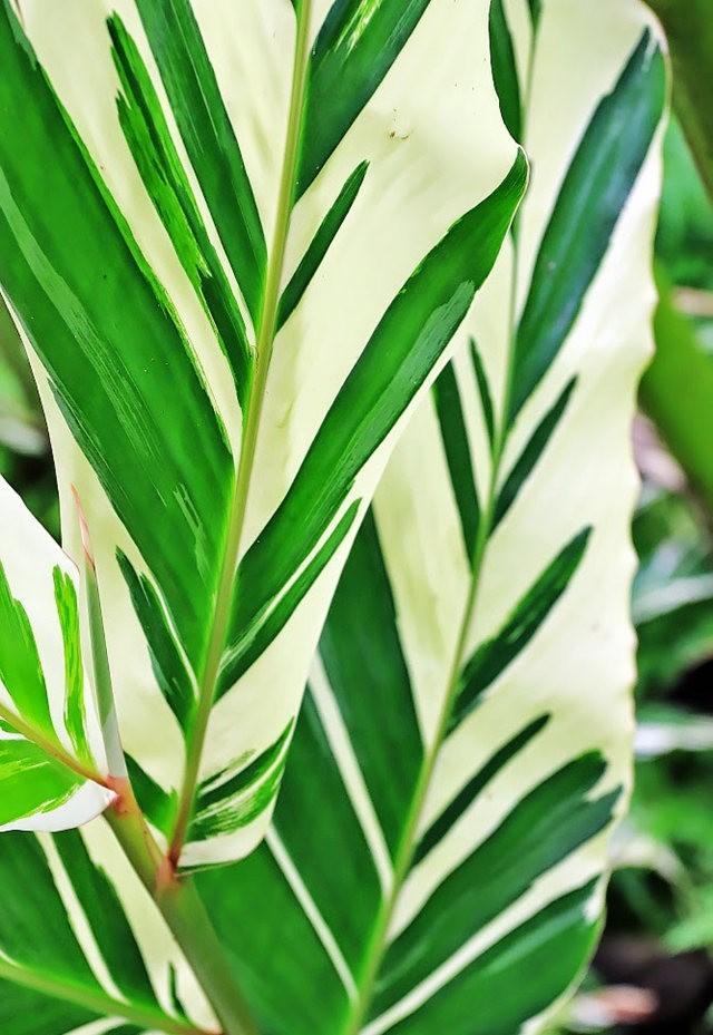 参观夏威夷热带生物保护区花园_图1-16