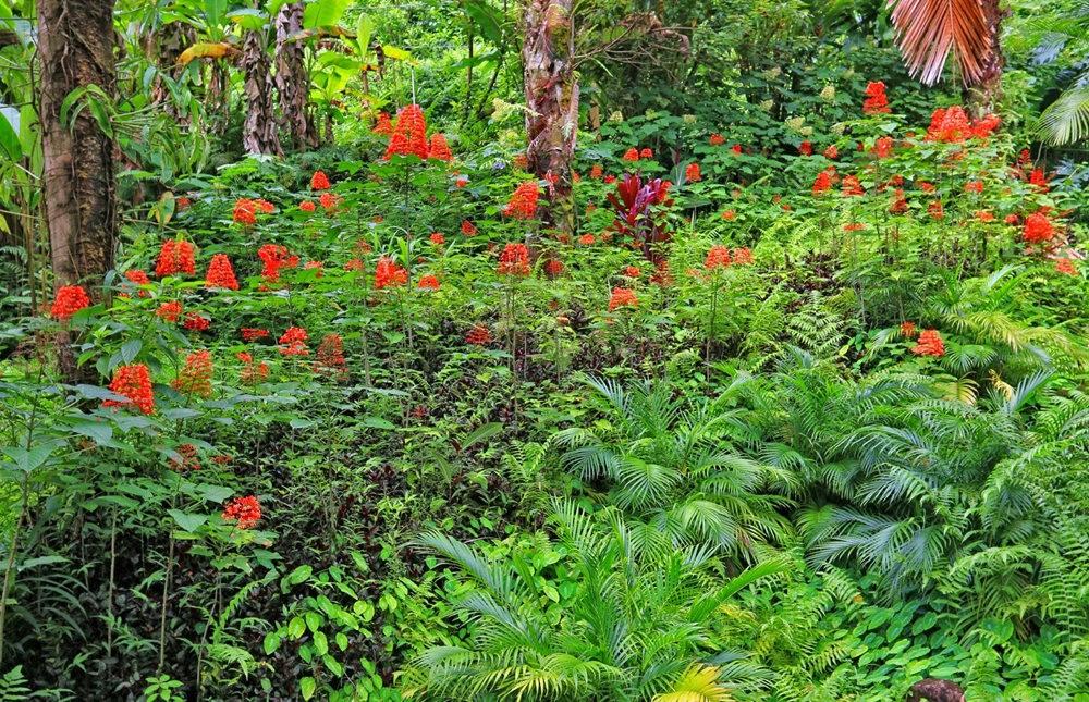 参观夏威夷热带生物保护区花园_图1-17