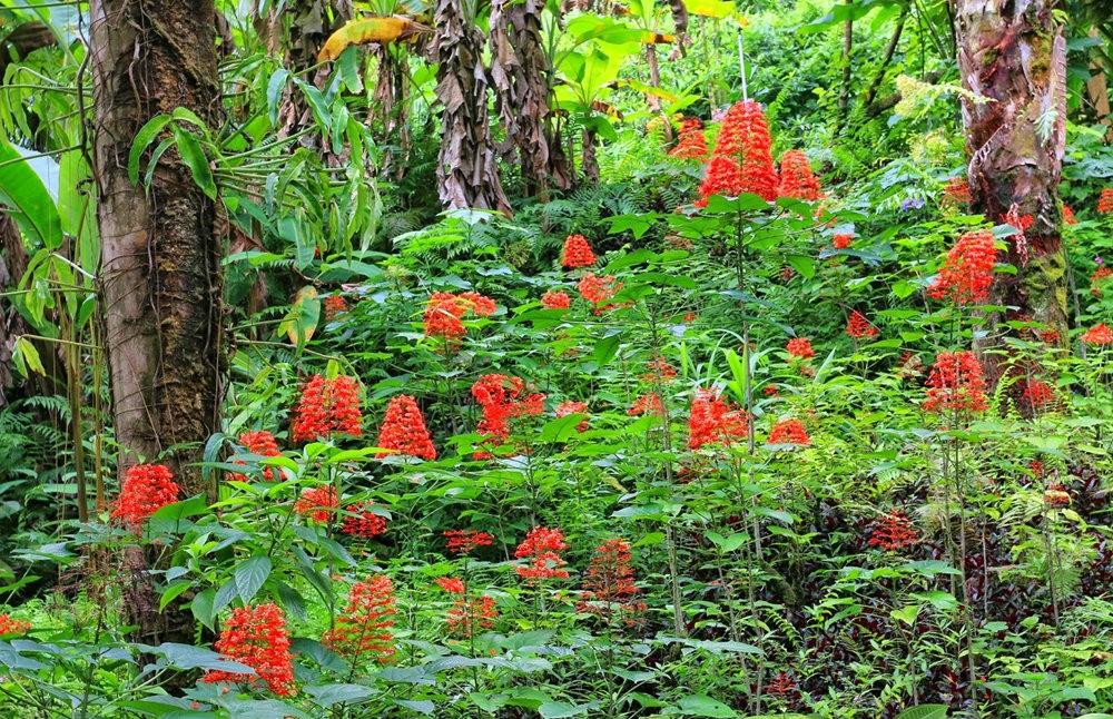 参观夏威夷热带生物保护区花园_图1-18