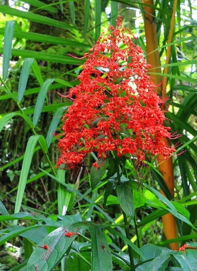 参观夏威夷热带生物保护区花园_图1-19