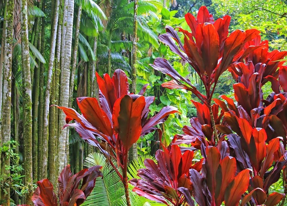 参观夏威夷热带生物保护区花园_图1-21