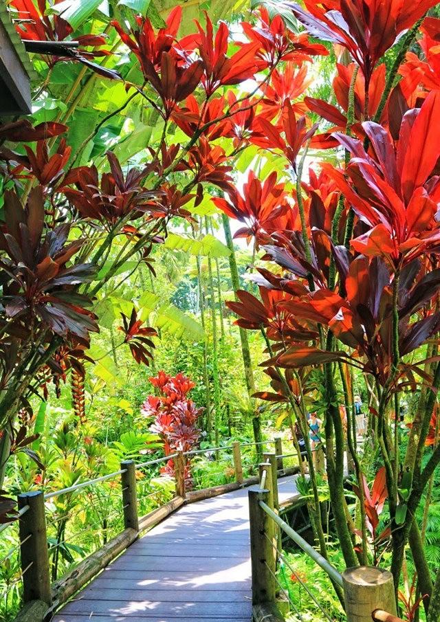 参观夏威夷热带生物保护区花园_图1-22