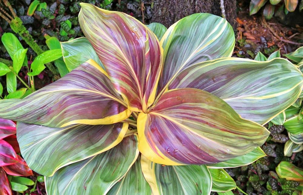 参观夏威夷热带生物保护区花园_图1-23