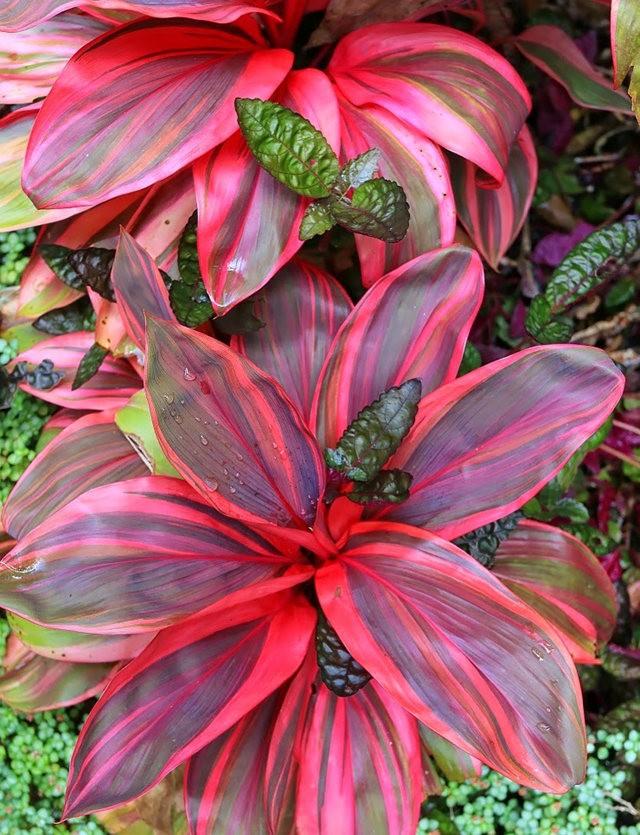 参观夏威夷热带生物保护区花园_图1-24