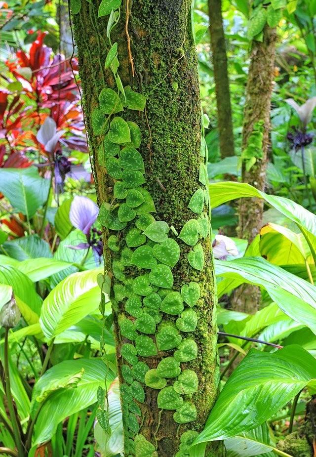 参观夏威夷热带生物保护区花园_图1-26