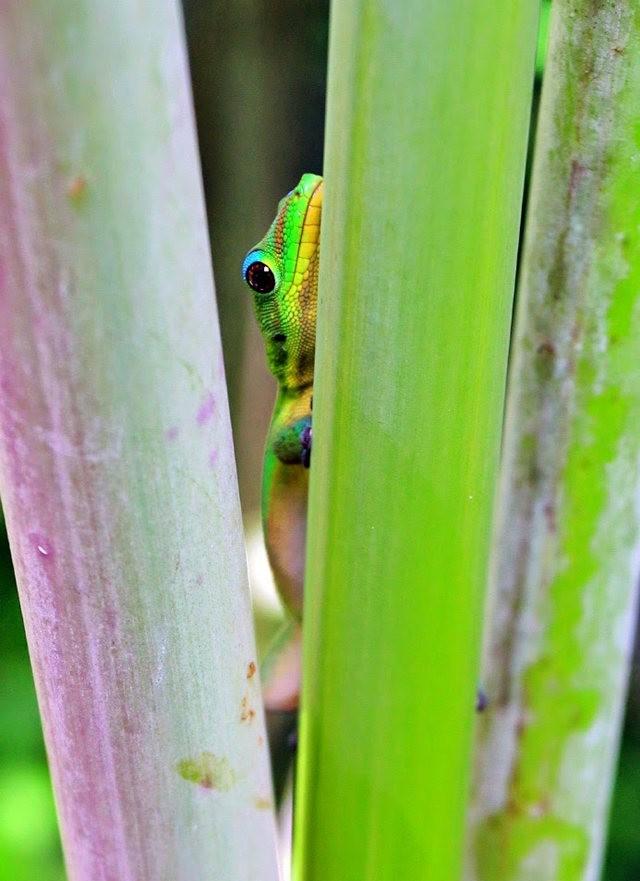 参观夏威夷热带生物保护区花园_图1-27