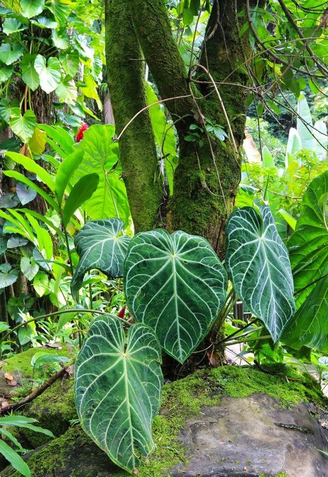 参观夏威夷热带生物保护区花园_图1-30