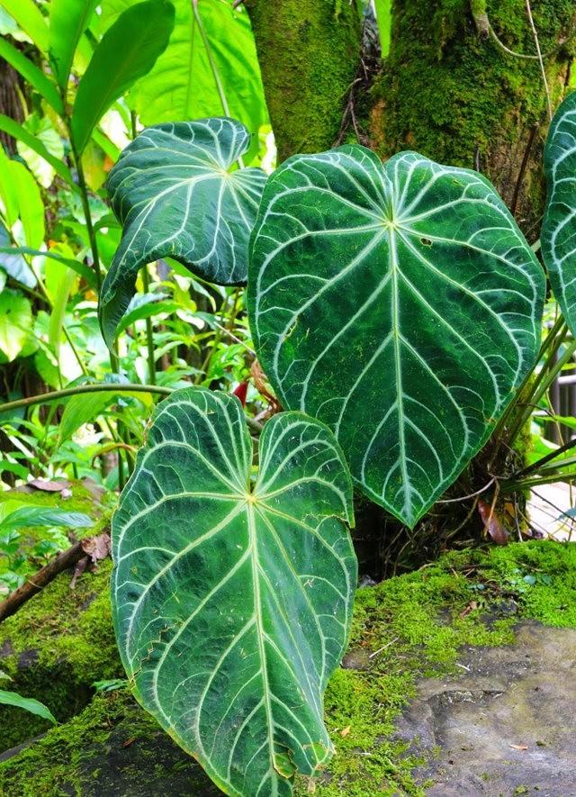 参观夏威夷热带生物保护区花园_图1-31