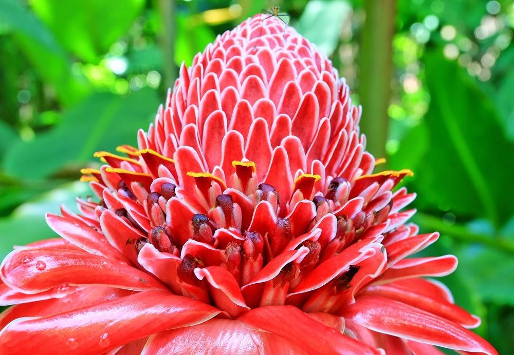 参观夏威夷热带生物保护区花园---2_图1-1