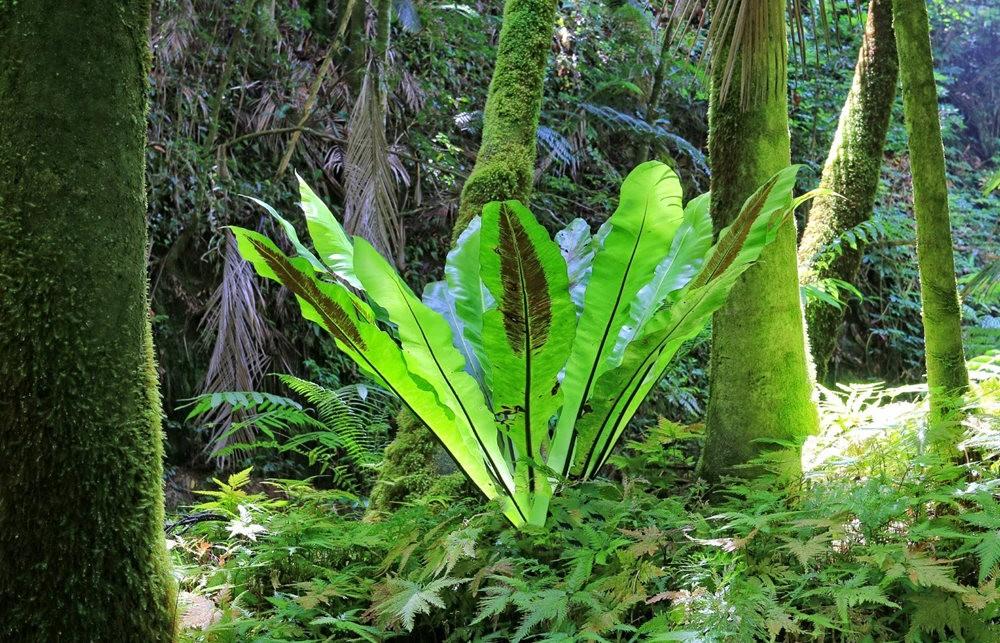 参观夏威夷热带生物保护区花园---2_图1-3