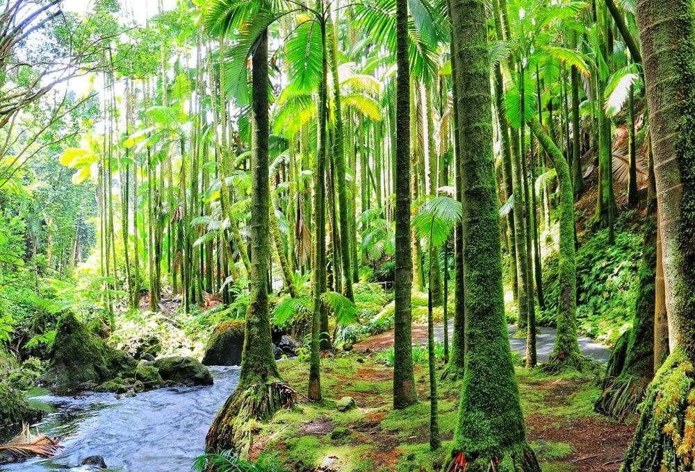 参观夏威夷热带生物保护区花园---2_图1-4