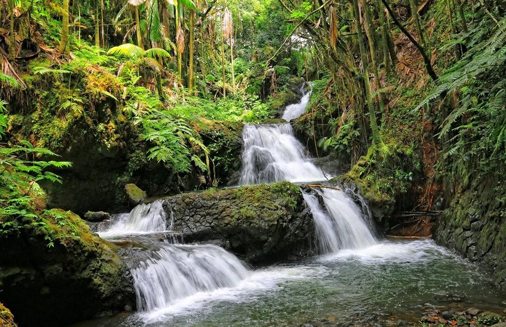 参观夏威夷热带生物保护区花园---2_图1-5
